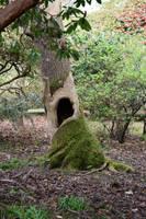 DSC 0031 Singing Tree 1 by wintersmagicstock