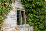 DSC 3339 Ivied Window