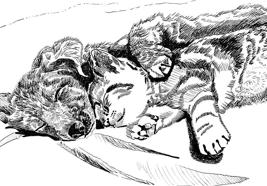 friends Peacefully sleeping by hidden-by-art