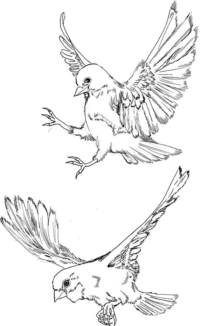 Line Art Quail : Birds in flight drawing