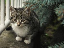 Little cat by Edemking