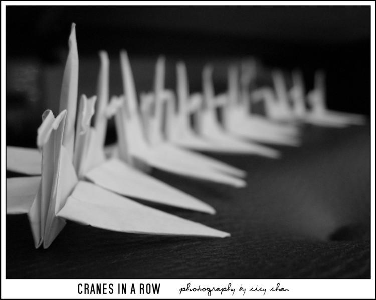 Cranes in a Row by cicychan