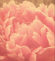petals by KayLynnay