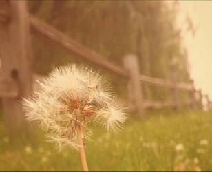 dandelion  by KayLynnay