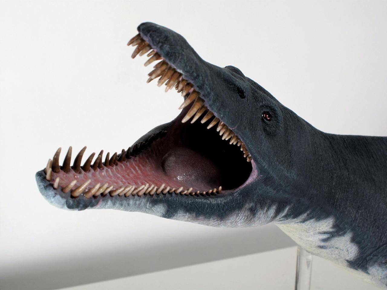 Pliosaurus macromerus 2 by Thomasotom
