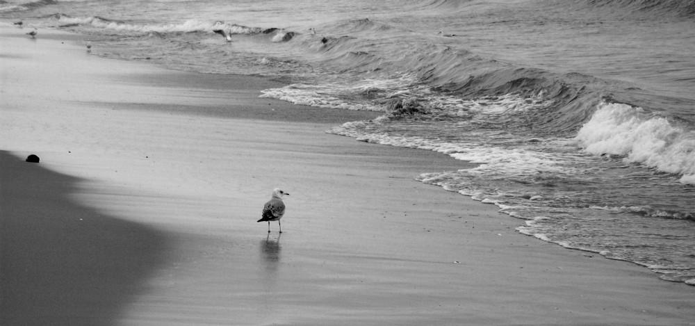 Sea-gull by Onlynikki