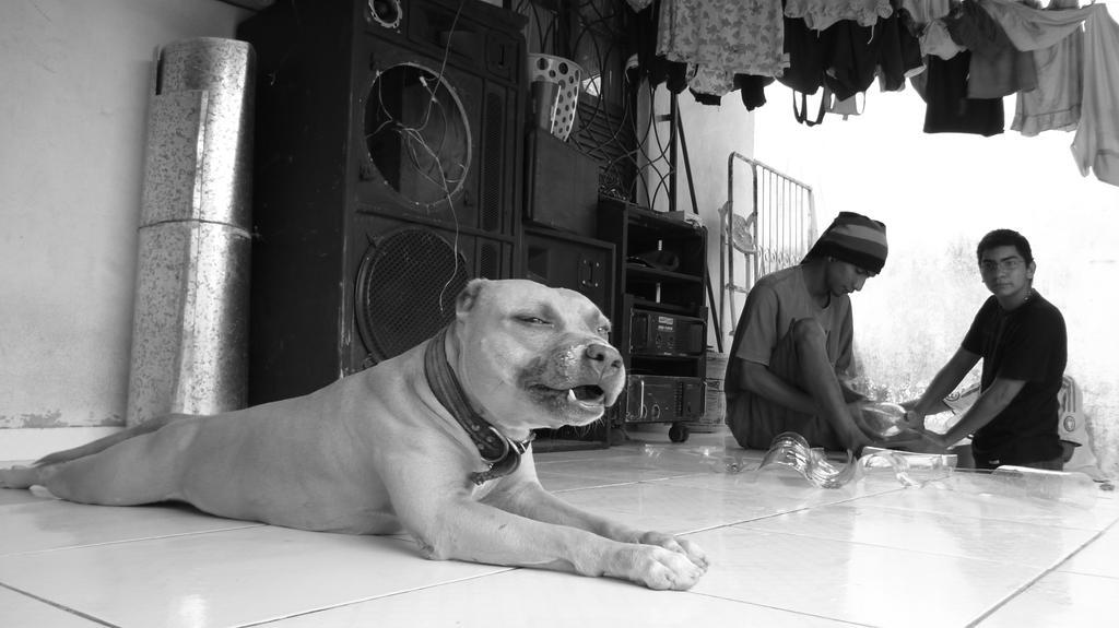 Dog dog by mrtyamiro