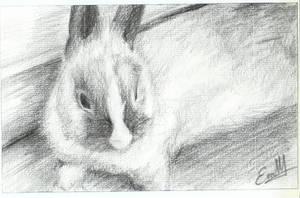 Bunny by Evychan