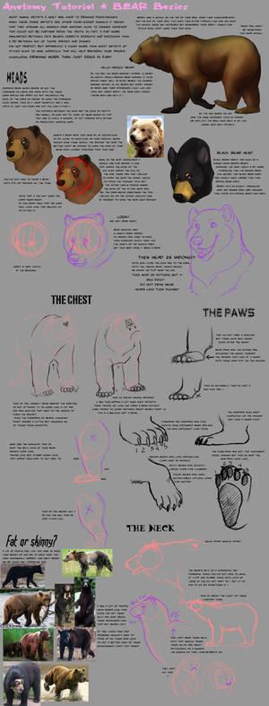 Anatomy Tutorial: Bear