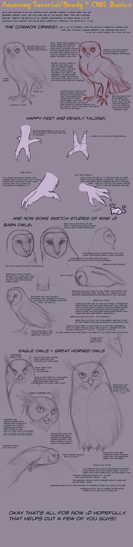 Anatomy Tutorial: Owl Basics by AddictionHalfWay