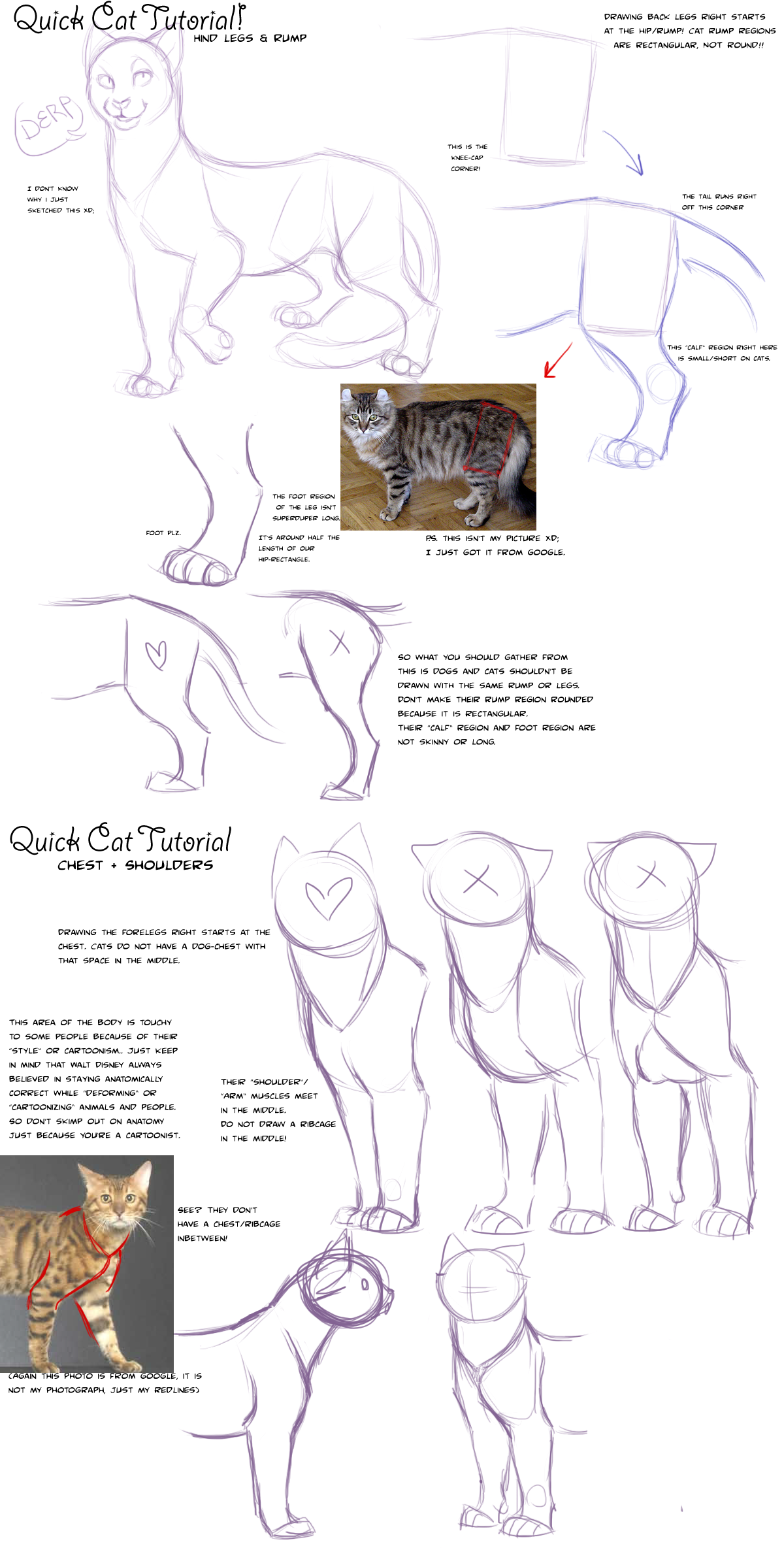 Quick Cat Anatomy Tutorial by AddictionHalfWay on DeviantArt