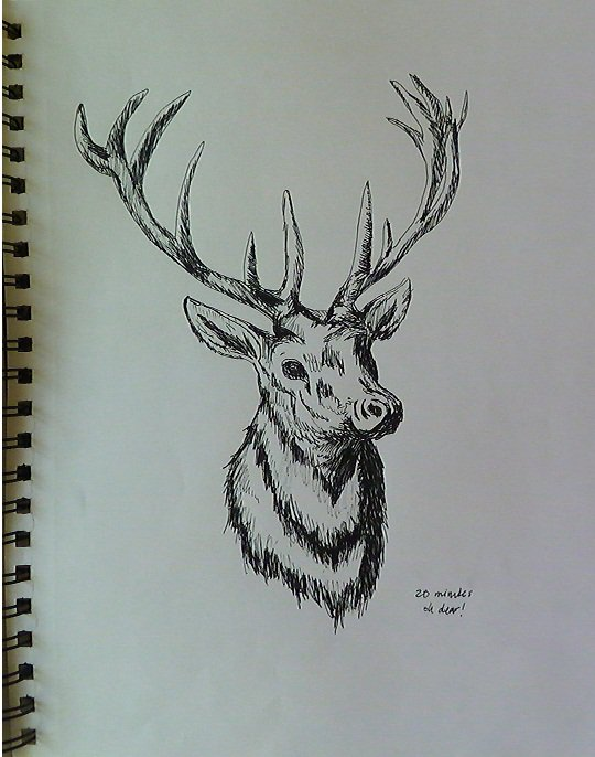 deer head drawing tumblr - photo #36