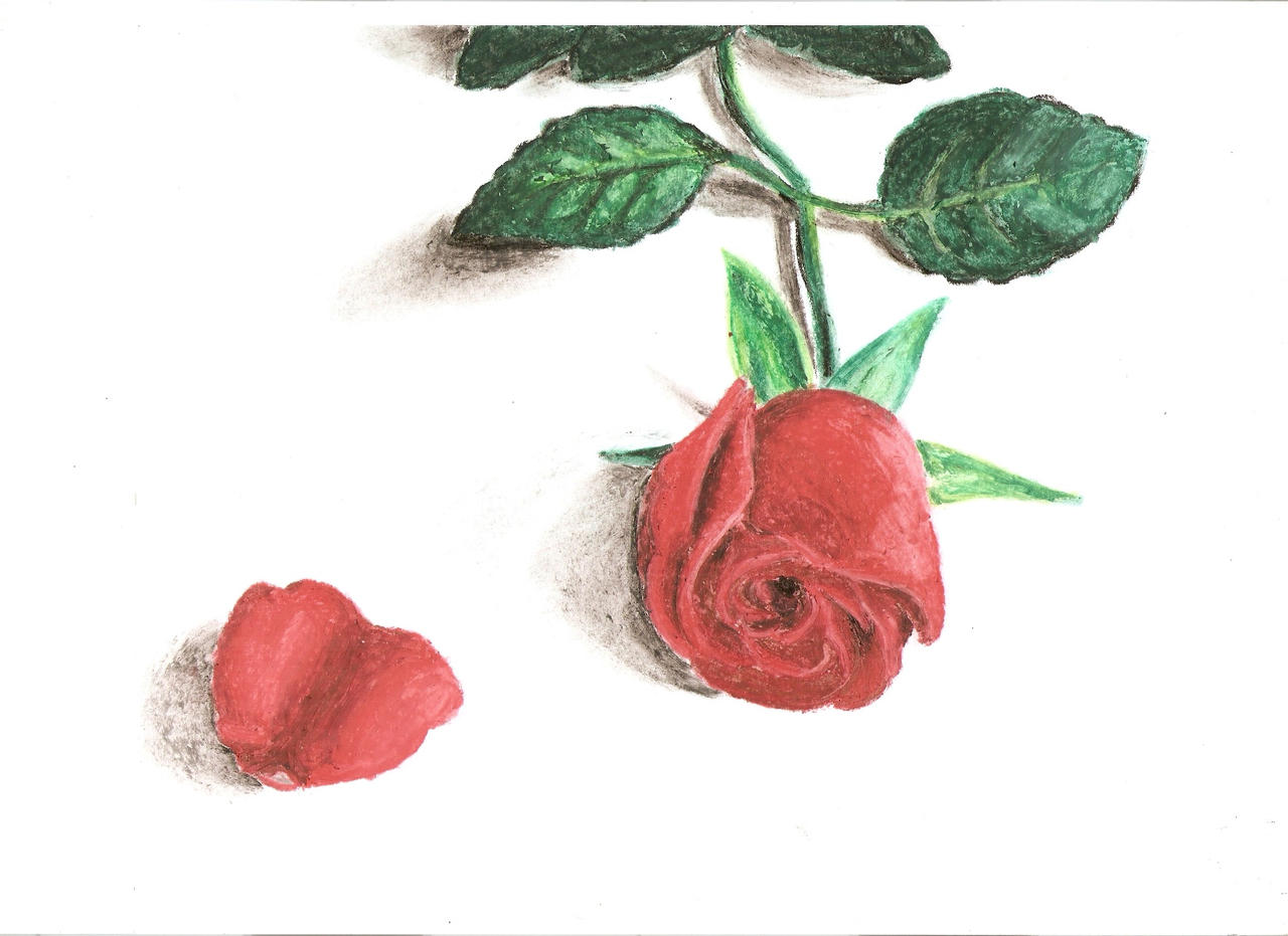 Rosa Roja by NicoSan13 on DeviantArt