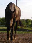 black horse stock 4