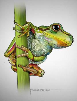 Frog coloured up