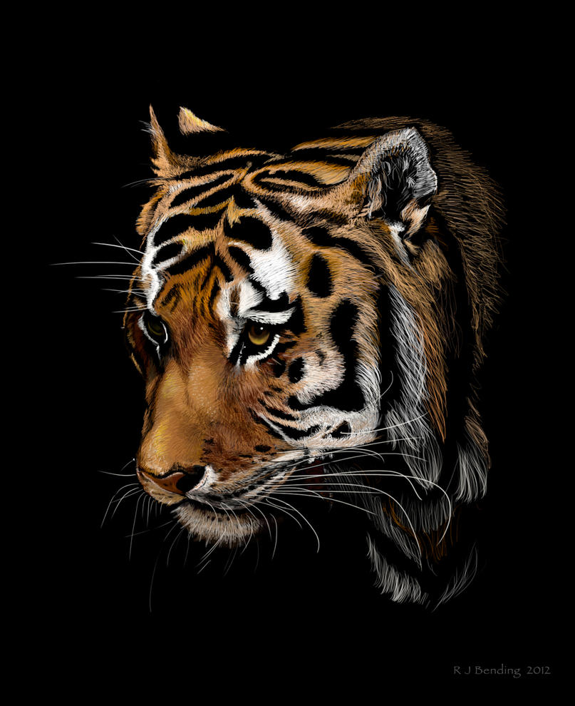 Tiger out of black by rojobe