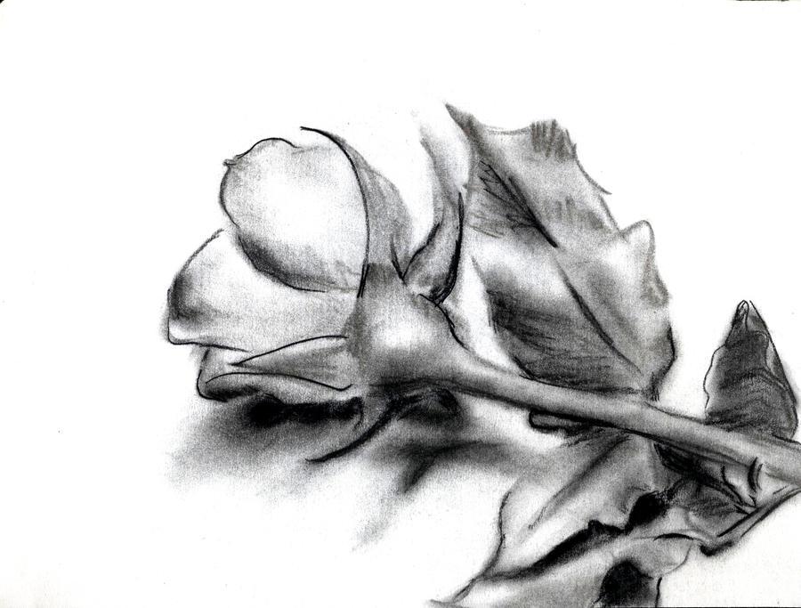 charcoal rose by Sanglantreve on DeviantArt