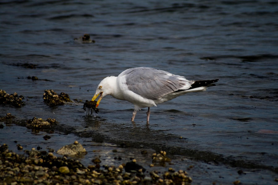 Crab and the Seagull by IV47E