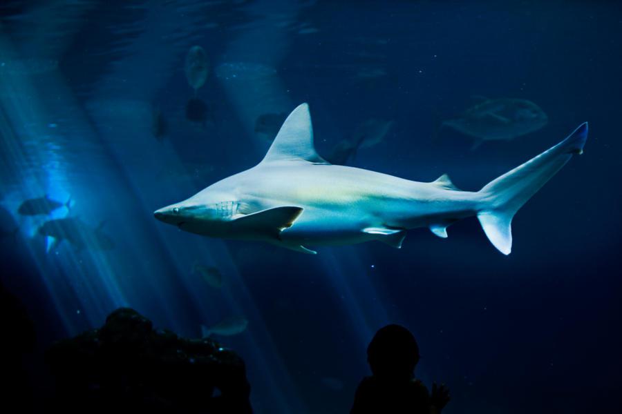 Shark Tank by IV47E