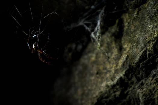 Dungeon Spider
