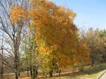 Stock 11 - Autumn