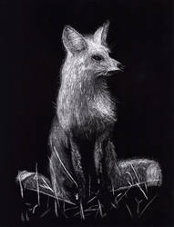 Scratch-board Fox by Ryakr