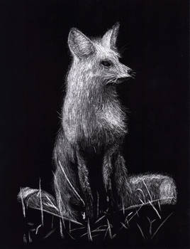 Scratch-board Fox