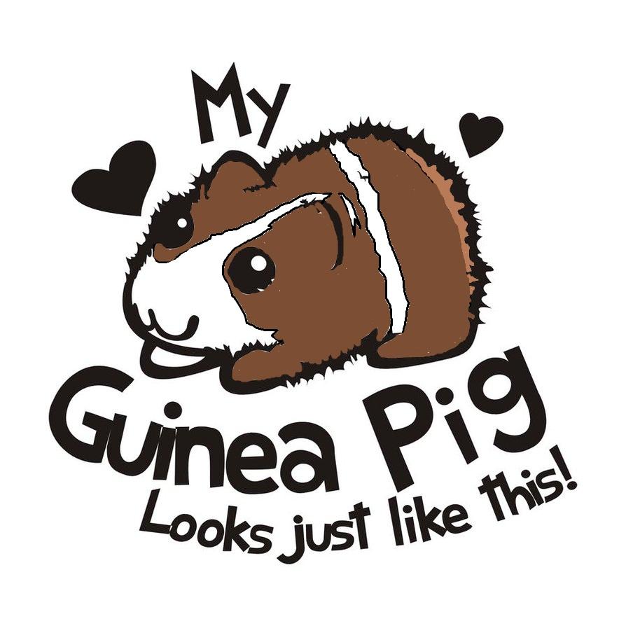 My Guinea Pig Meme by NinjaZombieKitten on DeviantArt