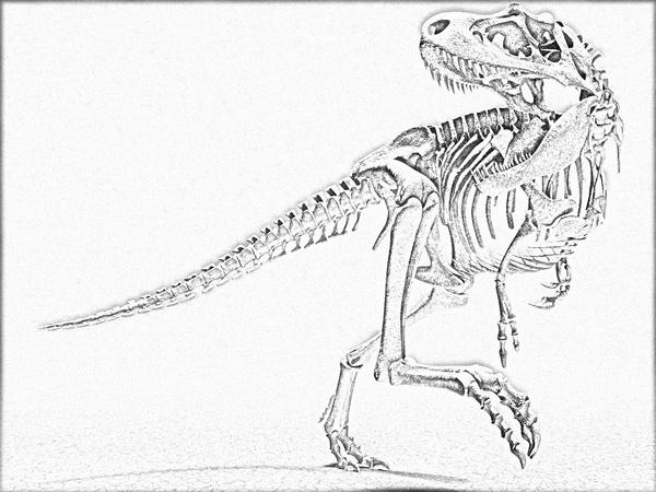 Line Art Dinosaur : Dinosaur skeleton lineart free by linecrazy on deviantart