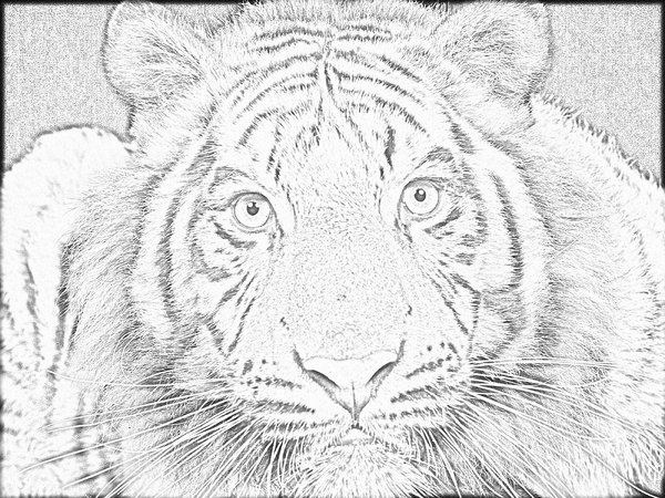 Line Drawing Of Tiger Face : Tiger face lineart free by linecrazy on deviantart