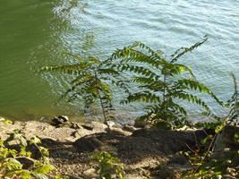 River Reeds by kadajs-kitsune