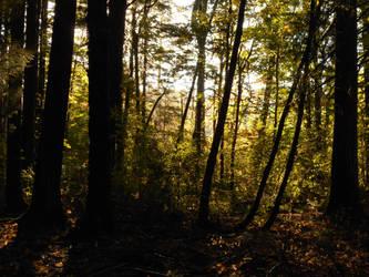 Mystical Woods by kadajs-kitsune