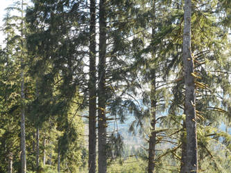 Stilled Trees by kadajs-kitsune