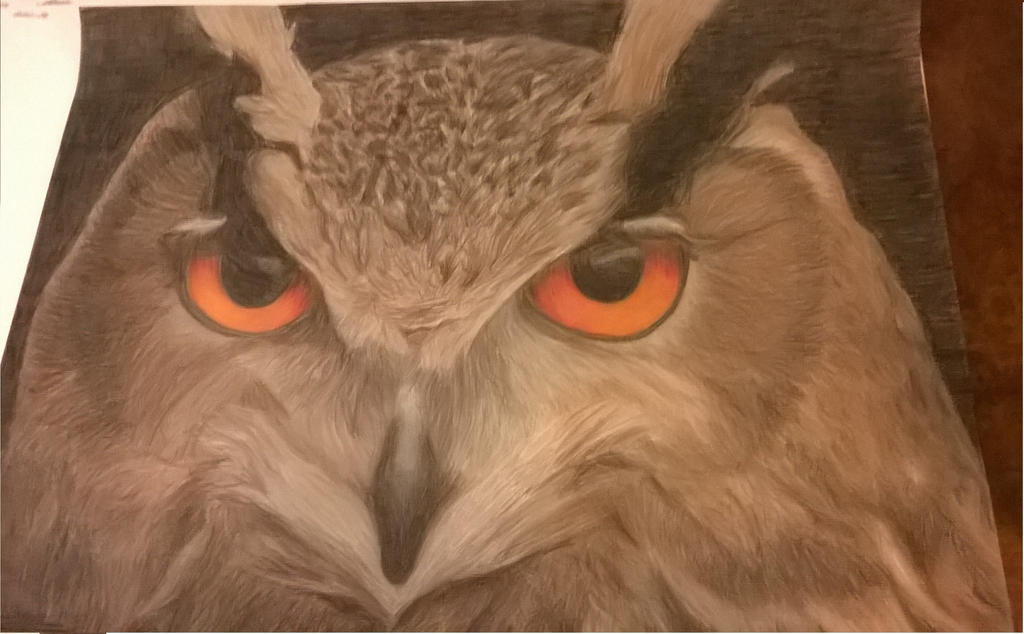 Owl with Colored Pencils