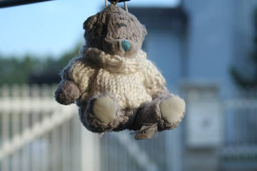 Small Teddy