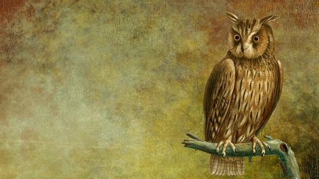 Vintage Owl Background 04
