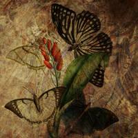 Vintage Artistic Butterflies