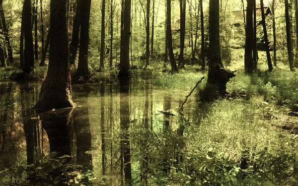 Swamp by cRobin