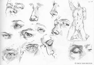 Eyes and noses study