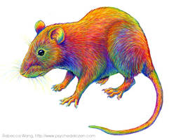 Colorful Chinese Zodiac Animals - Year of the Rat by rebeccawangart