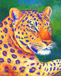 Queen of the Jungle - Leopard