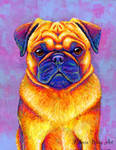 Comic Relief - Colorful Pug