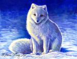 Peaceful Winter - Arctic Fox