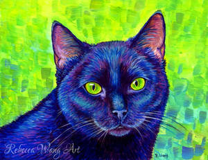 Black Cat with Chartreuse Eyes