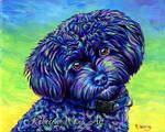 Colorful Pet Portrait - Linwood the Toy Poodle
