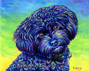 Colorful Pet Portrait - Linwood the Toy Poodle