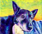 Colorful Pet Portrait - Misha