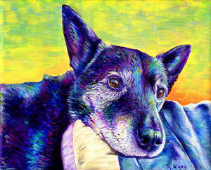 Colorful Pet Portrait - Misha
