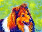 Colorful Shetland Sheepdog