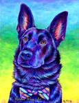 Colorful Pet Portrait - Cash
